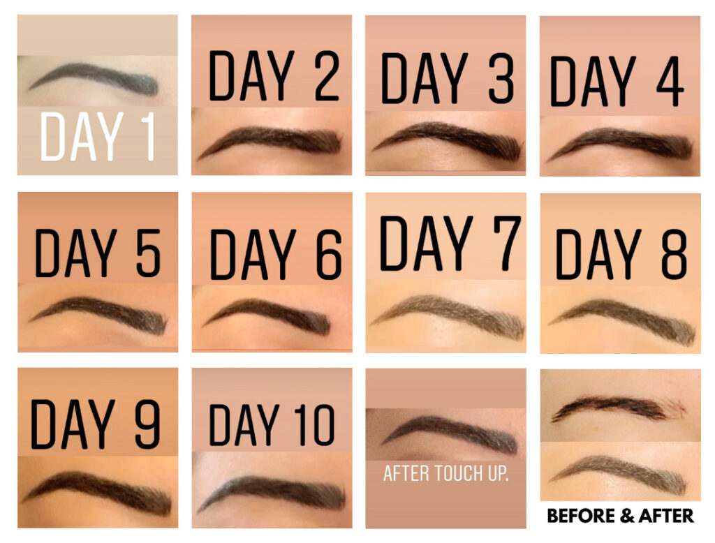 microblading day by day
